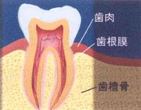 歯科 歯医者 和泉市/歯周病とは?